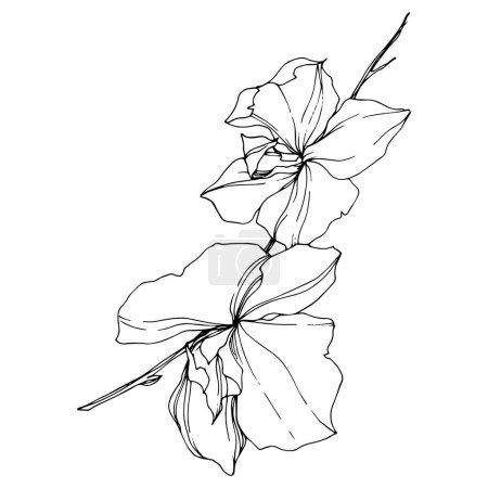 Vector black orchid flowers isolated on white. Engraved ink art.