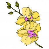 "Постер, картина, фотообои ""Vector yellow orchid flowers isolated on white. Engraved ink art. """