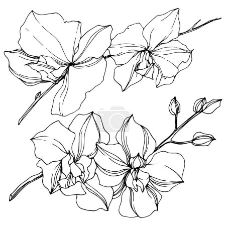 Illustration for Vector black orchid flowers isolated on white. Engraved ink art. - Royalty Free Image