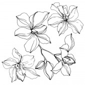 Vector black orchid flowers isolated on white Engraved ink art