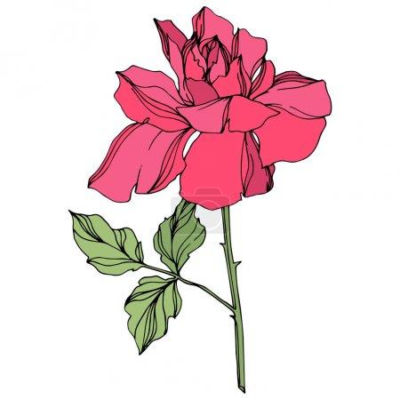 Vector różowy kwiat róży z zielonych liści na białym tle.