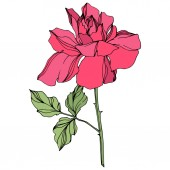 Vector pink rose flower with green leaves isolated on white