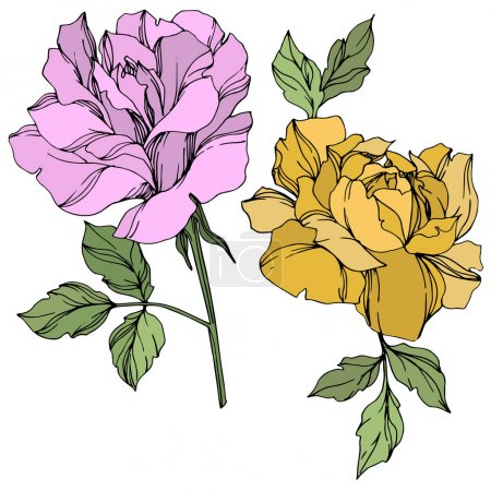 Illustration for Vector violet and yellow roses flowers with green leaves isolated on white. - Royalty Free Image
