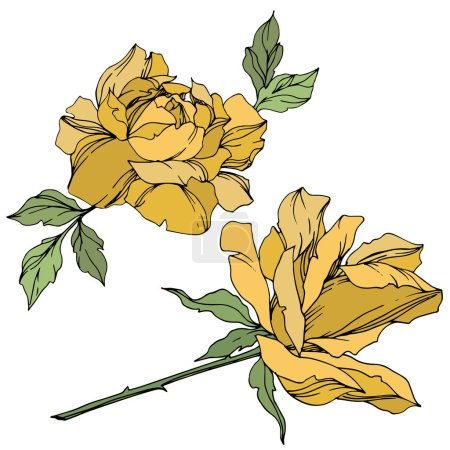 Illustration for Vector yellow roses flowers with green leaves isolated on white. - Royalty Free Image