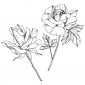 Vector black and white roses with leaves illustration elements