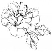 "Постер, картина, фотообои ""Vector black and white rose with leaves illustration element"""