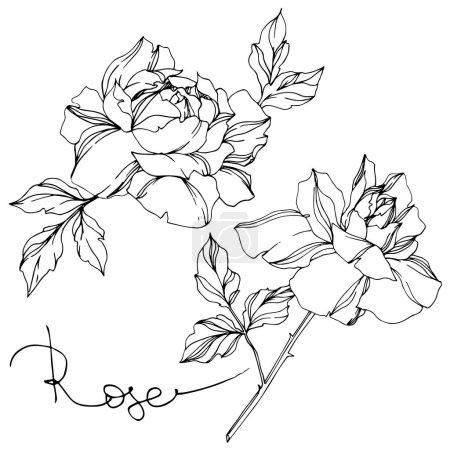 Illustration for Vector black and white roses with leaves illustration elements - Royalty Free Image