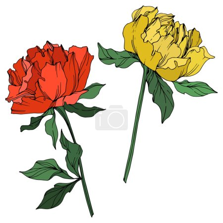 Illustration for Vector peonies with leaves isolated on white. Yellow, red and green engraved ink art on white background. - Royalty Free Image