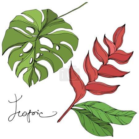 Illustration pour Été hawaïen tropical exotique. Palm plage arbre feuilles jungle botanique. Encre gravée noire et verte. Elément d'illustration de feuille isolé sur fond blanc . - image libre de droit