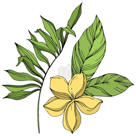 Illustration for Exotic tropical hawaiian summer. Palm beach tree leaves jungle botanical. Black and green engraved ink art. Isolated leaf illustration element on white background. - Royalty Free Image