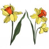 """Постер, картина, фотообои """"Вектор Нарцисс цветочный ботанический цветок. Искусство желтого и зеленого выгравированных чернил. Изолированный элемент иллюстрации нарцисса."""""""