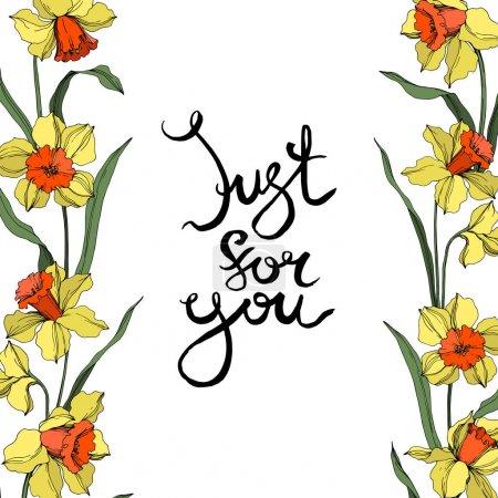 Illustration pour Fleur botanique florale de Vector Narcissus. Fleur sauvage de neige sauvage de feuille de source d'isolement. Art d'encre gravé jaune et vert. Carré d'ornement de bordure de cadre sur le fond blanc. - image libre de droit