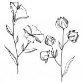 """Постер, картина, фотообои """"Векторный льняцветочные ботанические цветы. Черно-белые выгравированные чернила искусства. Изолированный элемент льняной иллюстрации."""""""