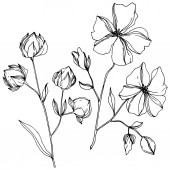 Vector Flax floral botanical flowers Black and white engraved ink art Isolated flax illustration element