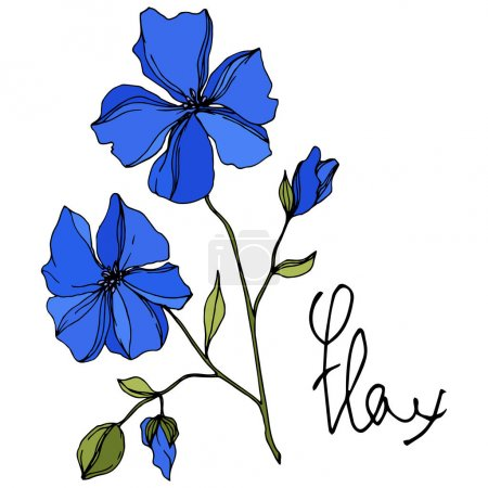 Illustration for Vector Flax floral botanical flowers. Wild spring leaf wildflower isolated. Blue and green engraved ink art. Isolated flax illustration element on white background. - Royalty Free Image