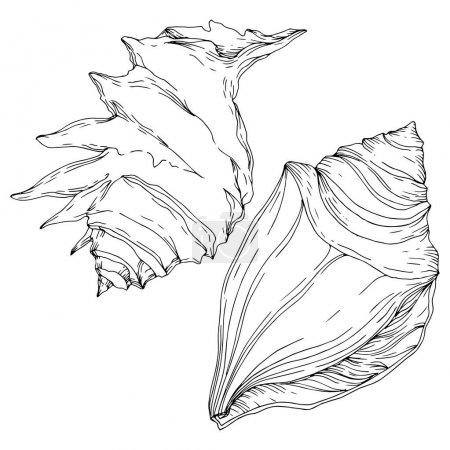 Illustration pour Été plage coquillage éléments tropicaux. Encre gravée en noir et blanc. Elément d'illustration de coquilles isolées sur fond blanc . - image libre de droit