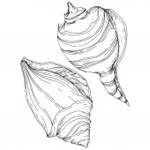 Summer beach seashell tropical elements Black and white engraved ink art Isolated shells illustration element