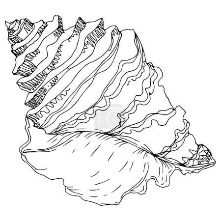 Ilustración de Verano playa de conchas tropicales tropicales. Arte de tinta grabada en blanco y negro. Elemento de ilustración de vaciados aislados sobre fondo blanco. - Imagen libre de derechos