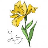 """Постер, картина, фотообои """"Ирис цветочные ботанические цветы. Черно-белые выгравированные чернила искусства. Изолированные ирисы иллюстрация элемент."""""""