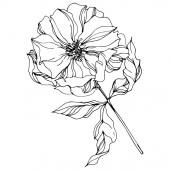 Peony botanical flowers Wild spring leaf Black and white engraved ink art Isolated peonies illustration element