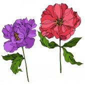 """Постер, картина, фотообои """"Peony цветочные ботанические цветы. Дикий весенний лист полевых цветов. Выгравированы чернила искусства. Изолированные пионы иллюстрация элемент."""""""