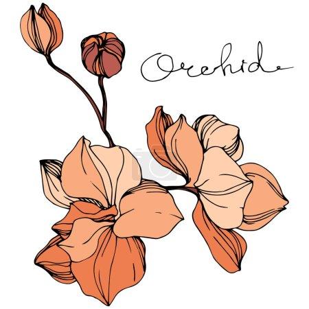 Illustration for Vector Orange orchid. Floral botanical flower. Wild spring leaf wildflower isolated. Engraved ink art. Isolated orchid illustration element. - Royalty Free Image