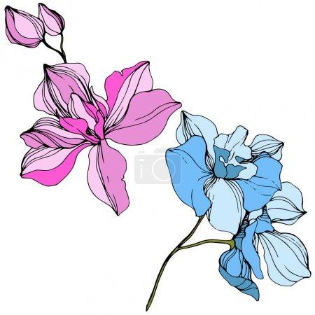 Illustration for Vector Pink and blue orchid. Floral botanical flower. Wild spring leaf wildflower isolated. Engraved ink art. Isolated orchid illustration element. - Royalty Free Image