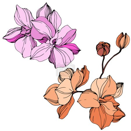 Illustration for Vector Orange and pink orchid. Floral botanical flower. Wild spring leaf wildflower isolated. Engraved ink art. Isolated orchid illustration element. - Royalty Free Image