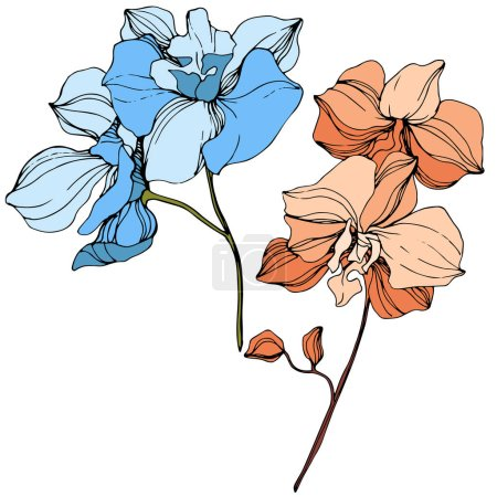 Illustration for Vector Orange and blue orchid. Floral botanical flower. Wild spring leaf wildflower isolated. Engraved ink art. Isolated orchid illustration element. - Royalty Free Image