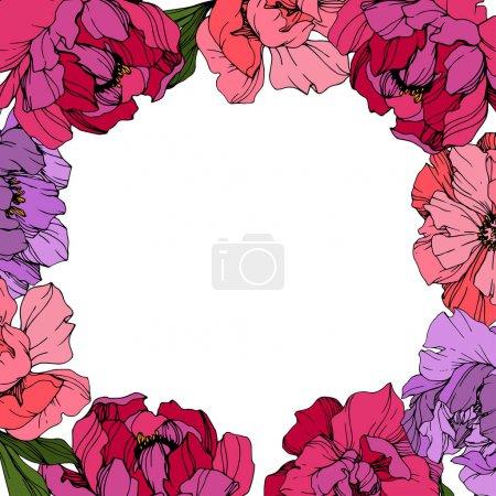 Ilustración de Vector de peonía rosa y púrpura. Flor botánica floral. Hoja de primavera silvestre wildflower aislado. Arte de tinta grabado. Marco borde ornamento cuadrado. - Imagen libre de derechos