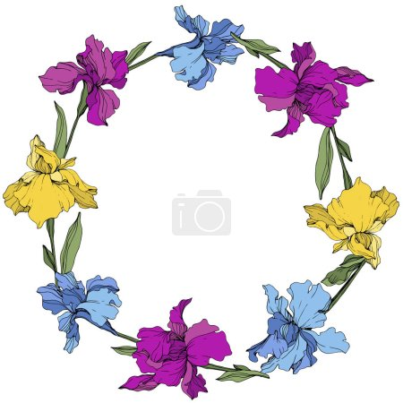 Illustration for Vector Purple, blue and yellow iris. Floral botanical flower. Wild spring leaf wildflower isolated. Frame border ornament square. - Royalty Free Image