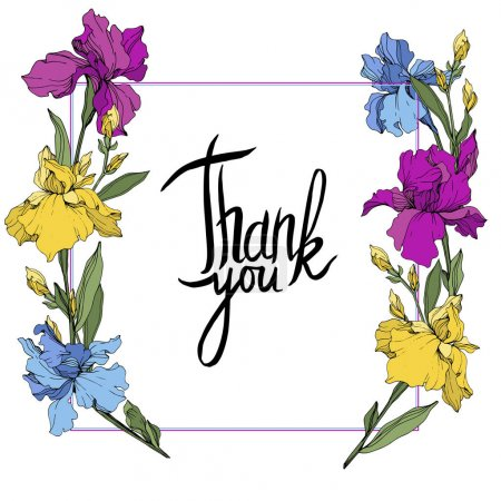 Illustration for Vector Purple, blue and yellow. Floral botanical flower. Wild spring leaf wildflower isolated. Frame border ornament square. Thank you handwriting monogram calligraphy. - Royalty Free Image