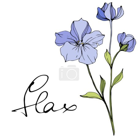 Illustration for Vector Blue flax. Floral botanical flower. Wild spring leaf wildflower isolated. Engraved ink art. Isolated flax illustration element. - Royalty Free Image
