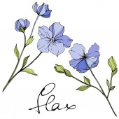 Vector Blue flax floral botanical flower Wild spring leaf wildflower Engraved ink art Isolated flax illustration element