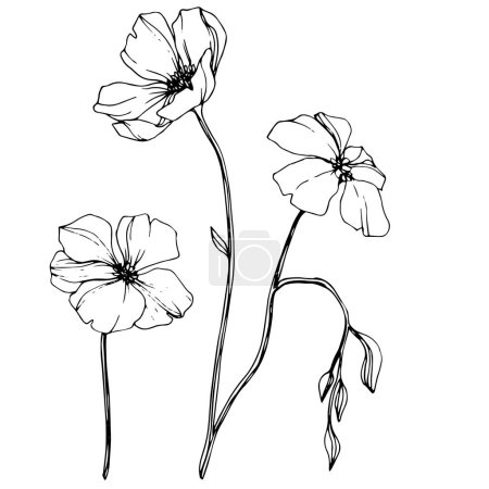 Illustration for Vector Flax floral botanical flower. Wild spring leaf wildflower isolated. Black and white engraved ink art. Isolated flax illustration element. - Royalty Free Image