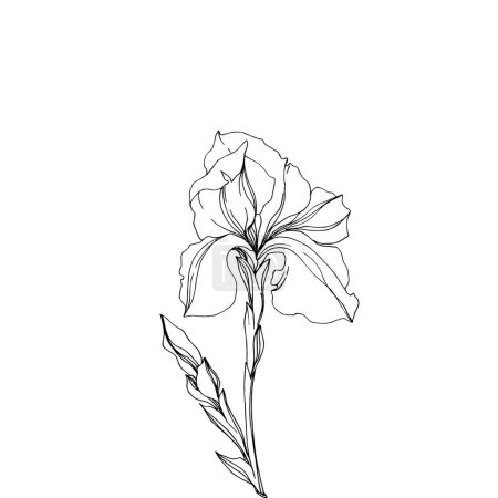 Illustration for Vector Iris floral botanical flowers. Wild spring leaf wildflower isolated. Black and white engraved ink art. Isolated irises illustration element jn white background. - Royalty Free Image