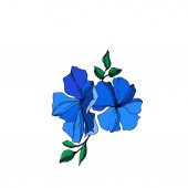 Vector Flax floral botanical flowers Blue and green engraved ink art Isolated flax illustration element