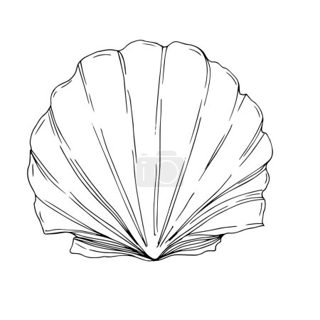 Illustration for Vector Summer beach seashell tropical elements. Black and white engraved ink art. Isolated shells illustration element on white background. - Royalty Free Image