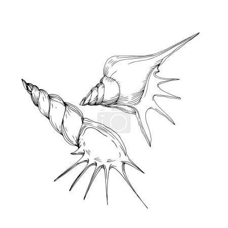 Ilustración de Vector Summer playa de conchas tropicales. Arte de tinta grabada en blanco y negro. Elemento de ilustración de vaciados aislados sobre fondo blanco. - Imagen libre de derechos