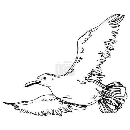 Illustration for Sky bird seagull in a wildlife. Wild freedom, bird with a flying wings. Black and white engraved ink art. Isolated gull illustration element on white background. - Royalty Free Image