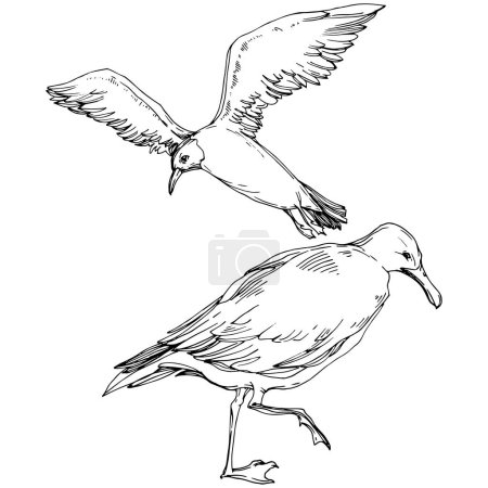 Illustration pour Ciel oiseau mouette dans une faune sauvage. Liberté sauvage, oiseau aux ailes volantes. Encre gravée en noir et blanc. Elément d'illustration de goéland isolé sur fond blanc . - image libre de droit