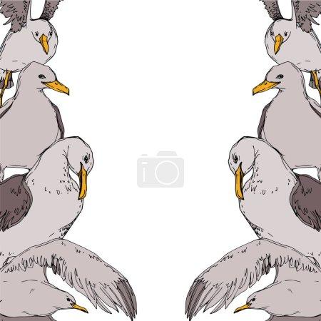 Illustration pour Vector Oiseau céleste mouette dans une faune sauvage. Liberté sauvage, oiseau aux ailes volantes. Encre gravée en noir et blanc. Cadre bordure ornement carré sur fond blanc . - image libre de droit