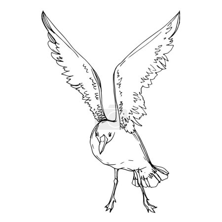 Illustration for Vector Sky bird seagull in a wildlife. Wild freedom, bird with a flying wings. Black and white engraved ink art. Isolated seagull illustration element on white background. - Royalty Free Image