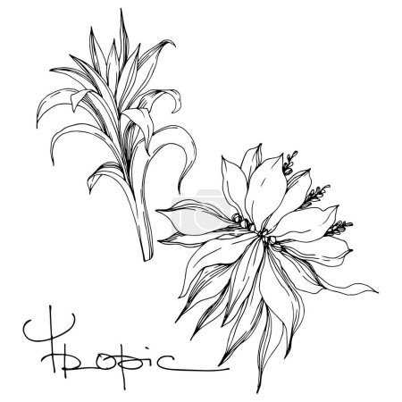 Illustration for Vector Exotic tropical hawaiian summer. Palm beach tree leaves jungle botanical flowers. Black and white engraved ink art. Isolated flower illustration element. - Royalty Free Image