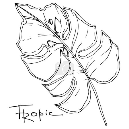 Foto de Vector Verano hawaiano tropical exótico. Palmera deja la selva botánica. Tinta grabada en blanco y negro. Elemento de ilustración de hojas aisladas sobre fondo blanco . - Imagen libre de derechos