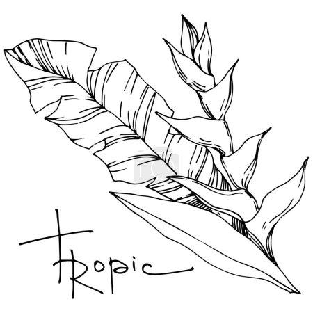 Illustration pour Vecteur Été hawaïen tropical exotique. Palm plage arbre feuilles jungle plante botanique. Encre gravée en noir et blanc. Feuilles isolées élément d'illustration . - image libre de droit