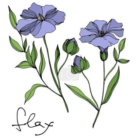Illustration pour Fleurs botaniques florales de lin de vecteur. Fleur sauvage de neige sauvage de feuille de source d'isolement. Art d'encre gravé noir et blanc. Élément isolé d'illustration de lin sur le fond blanc. - image libre de droit