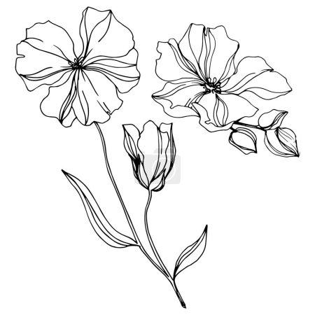 Illustration pour Vecteur Fleurs botaniques florales de lin. Feuille sauvage de printemps fleur sauvage isolée. Encre gravée en noir et blanc. Élément d'illustration isolé en lin sur fond blanc . - image libre de droit