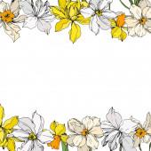 Vector Narcissus floral botanical flowers Black and white engraved ink art Frame border ornament square