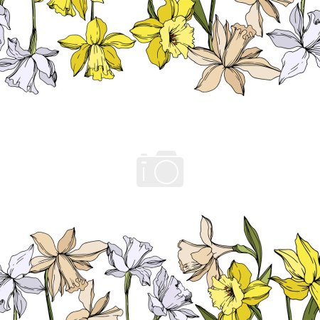 Illustration for Vector Narcissus floral botanical flowers. Wild spring leaf wildflower isolated. Black and white engraved ink art. Frame border ornament square on white background. - Royalty Free Image